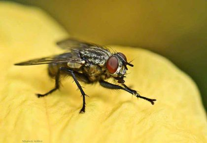 Why Are There So Many Flies During Summer?