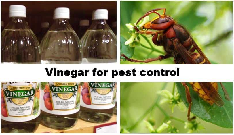 vinegar pest control