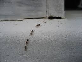 How To Get Rid Of Ants In Your House Naturally