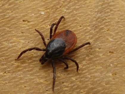 best yard treatments for ticks